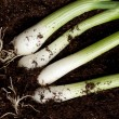 Bunch of fresh green onions - Stock Photo