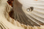 Pearl in the seashell — Stock Photo