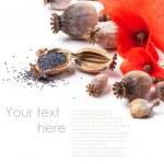 Poppy grain and flowers — Stock Photo #30257433