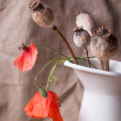 Still-life with poppy — Stock Photo #30393729