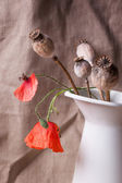 Still-life with poppy — Stock Photo