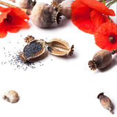 Poppy grain and flowers — Stock Photo