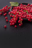Red currant over black — Stock Photo