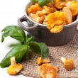 Pot of chanterelles — Foto Stock