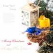 Christmas card with blue bird — Stock Photo