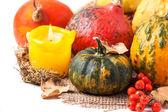 Autumn mini pumpkins — Stockfoto