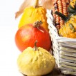 Autumn mini pumpkins — Stock Photo