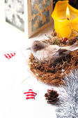 Christmas card with bird in nest — Stock fotografie
