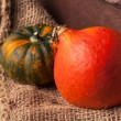 Tow mini pumpkins — Stock Photo