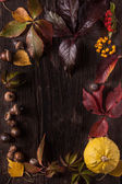 Ornament boarder from autumn leaves — Stock Photo