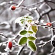 Frozen leaves — Foto Stock