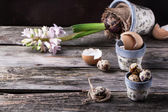 Pots with quail eggs and Hyacinthus flower — Photo
