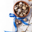 Quail eggs with blossom branch — Stock Photo