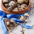 Stock Photo: Quail eggs with blossom branch