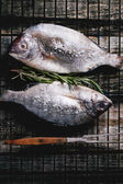 Tow raw dorado fish with rosemary on grill — Stock Photo