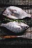 Tow raw dorado fish with rosemary on grill — Stock Photo