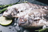 Tow raw dorado fish under with ice — Stock Photo