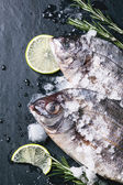 Tow raw dorado fish with rosemary over black — Stock Photo