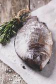 Raw dorado fish with rosemary — Stock Photo