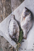 Tow raw dorado fish with rosemary — Stock Photo