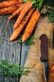 Bunch of carrots — Stock Photo