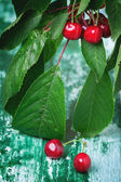 Bunch cherry tree with berries and leaves — Stock Photo