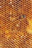 Honungskakor — Stockfoto