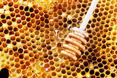 Honeycombs — Stockfoto