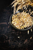 Ripe wheat and oat ears and seeds — Stock Photo
