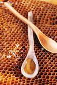 Wooden spoon on honeycombs — Stock Photo