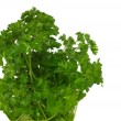 Bunch of parsley isolated on white - Stock Photo