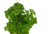 Bunch of parsley isolated on white — Stock Photo