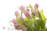 Tulips in the Window — Stock Photo