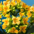 Stock Photo: Cheery Orange Flowers
