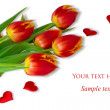 Royalty-Free Stock Photo: Red tulips on white backgroung