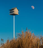 Birdhouse on sand dune — Stock Photo
