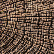 Stock Photo: Tree trunk abstract background