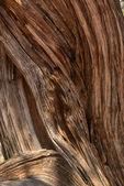 Juniper bark abstract background — Stock Photo
