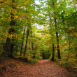 Path in a forest of chestnut trees — Stock Photo