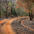 Road with burned grass — Stock Photo #19745545