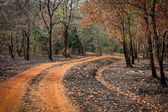 Road with burned grass — Stock Photo