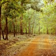 Stock Photo: Road in forest