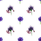 Seamless pattern flower blue. Cornflowers on white background — Stock Photo