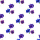 Seamless pattern flower blue. Cornflowers on white background — Foto Stock