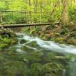 Wood bridge and babbling brook in the forest,Beusnita National Park,Romania — Stock Photo