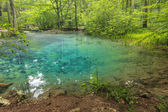 Majestic clean lake in forest,Ochiul Bei,Beusnita National Park,Romania — Stock Photo