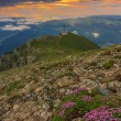 Stock Photo: Majestic sunrise and pink flowers in the mountains,Bucegi mountains,Carpathians,Romania