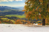 Beautiful autumn landscape in the forest,Carpathians,Transylvani — Stock Photo