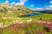 High mountains,pink rhododendrons and glacier lake,Retezat mountains,Romania,Europe — Stock Photo