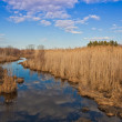 Stock Photo: Small creek in Lac Saint-Francois National Wildlife area